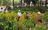 """Sức mua hoa Tết giảm đến 50%, sở Công thương TP.HCM kêu gọi """"giải cứu"""""""
