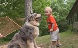Chó cưng lao tới như muốn vồ con trai, bố mẹ hoảng hồn nhưng thấy biết ơn ngay sau đó vì lý do này