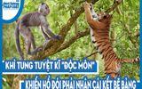 """Video: Khỉ tung tuyệt kĩ """"độc môn"""" khiến hổ đói phải nhận cái kết bẽ bàng"""