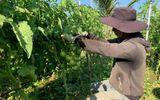 Kinh doanh - Đắng đót được mùa nông sản