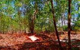 Tin trong nước - Kinh hãi phát hiện thi thể treo cổ trong rừng tràm: Trưng cầu giám định tử thi