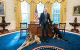 """Chó cưng của Tổng thống Biden phải """"về quê"""" sau khi lỡ cắn một mật vụ Mỹ"""