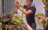 Nguyễn Duy Tân - Doanh nhân thành đạt biến niềm đam mê hoa lan thành chủ vườn lan với diện tích hơn 300m2