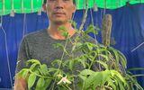 Nghệ nhân Nguyễn Đăng Thoả chia sẻ kinh nghiệm chơi hoa lan