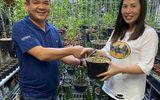 Nghệ nhân Nguyễn Ngọc Huy - Làm giàu từ niềm đam mê với hoa Lan