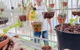 Xã hội - Nghệ nhân Nguyễn Tấn Mỹ và niềm đam mê cháy bỏng dành cho hoa lan