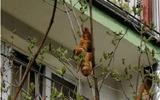 """""""Con vật lạ"""" xuất hiện trên cây khiến người dân náo loạn, biết sự thực ai nấy thở phào"""