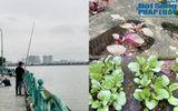 Cộng đồng mạng - Vườn rau xanh mướt trong hốc đá hồ Tây khiến khách nước ngoài tròn mắt