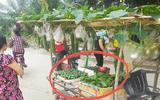 Cộng đồng mạng - Sạp rau đặc biệt gây sốt mạng vì có cách bán hàng quá cao tay, ai thấy cũng phải vào mua
