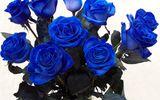 Quà độc Valentine: Hoa hồng xanh giá gần 2 triệu gây tranh cãi