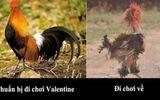 Những hình ảnh Valentine hài hước, độc đáo