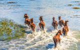 Chùm ảnh ngựa hoang đùa rỡn trên bãi biển