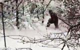 """""""Người tuyết Yeti"""" bí ẩn xuất hiện tại Nga?"""