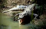 Hai nam sinh thương vong vì cá sấu tấn công khi đi bơi