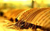 Giá vàng ngày 15/10: Vàng tiếp tục lao dốc mạnh