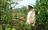 """Đắk Lắk: Khô hạn kéo dài, hàng nghìn diện tích cây trồng """"khát nước"""""""