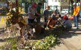 Nở rộ thú chơi lan rừng ở phố núi Gia Lai