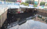 TP HCM: Cá chết bất thường, nổi trắng kênh Nhiêu Lộc- Thị Nghè