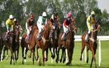 Đại gia xây trường đua ngựa trăm triệu USD: Hệ lụy khó lường