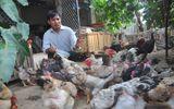 Gà Hồ, gà Đông Tảo khan hàng dịp tết Nguyên đán 2015
