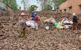 Người dân đổ xô gom lá điều khô bán cho thương lái trước tết