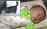 """Cảm động mèo hoang """"cứu sống"""" em bé bị bỏ rơi"""