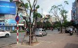 Đầu tư 3,5 tỷ đồng thay thế nhiều cây xanh trên các phố Hà Nội