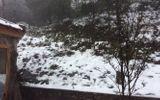 Mưa tuyết gây thiệt hại lớn đến hoa màu, rau quả tại Sa Pa