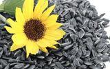 Tết ăn hạt hướng dương có lợi gì cho sức khỏe?