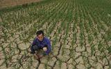 Nhiều vùng ở Việt Nam dự báo sẽ bị hạn hán cực nặng