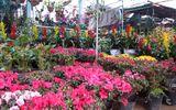 TP Vinh: Nhộn nhịp cung đường hoa và cây cảnh đón Tết