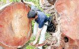Chặt 6.700 cây xanh Hà Nội: Tiết lộ từ dân buôn gỗ