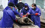 Trung Quốc: Kỳ lạ xác ướp 700 tuổi vẫn còn nguyên vẹn