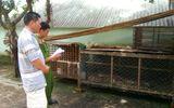 Phát hiện cơ sở nuôi nhốt động vật hoang dã trái phép