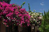 Nhà đẹp - Những loại cây trồng trong nhà giúp gia chủ hút tài lộc, gọi may mắn