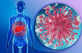 Y tế sức khỏe - Lần đầu tiên tìm ra hoạt chất điều trị bệnh viêm gan B mạn tính từ cây nhó đông