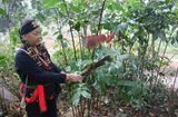 Y tế - Các nhà khoa học khẳng định thứ cây đặc biệt trên núi có chức năng tăng cường sinh lý