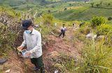 Thị trường - Gia Lai: Trẻ em cũng đổ xô đi bắt sâu độc giá 1,7 triệu đồng/kg