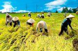 Thực phẩm - Nông dân đồng bằng sông Hồng với xây dựng HTX Nông nghiệp