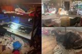 """Cộng đồng mạng - Bắt giữ """"cặp ba"""" để 3 bé gái sống trong ngôi nhà ngập rác với hàng trăm con vật"""