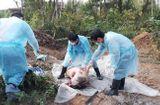Tin trong nước - Bắt chủ tịch xã cùng 3 cán bộ khai khống lợn bị nhiễm dịch tả châu Phi để trục lợi