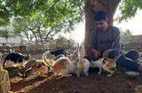 Gia đình - Tình yêu - Thị trấn ở Syria, nơi mèo đông hơn người