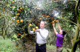 Cộng đồng mạng - Tậu nhà lầu, xe hơi từ trồng cam, cả làng nhan nhản tỷ phú
