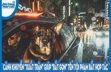 Video-Hot - Video: Cảnh khuyển phi thân nhanh như tia chớp, tóm gọn tên trộm xe hơi ngoan cố