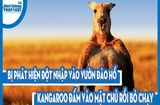 Video-Hot - Video: Bị phát hiện đột nhập vào vườn đào hố, Kangaroo đấm vào mặt chủ rồi bỏ chạy