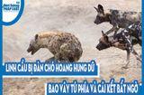 Video-Hot - Video: Linh cẩu bị đàn chó hoang hung dữ bao vây tứ phía và cái kết bất ngờ