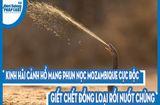 Video-Hot - Video: Kinh hãi cảnh hổ mang phun nọc Mozambique cực độc giết chết đồng loại rồi nuốt chửng