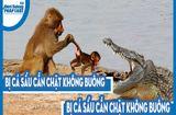 """Video-Hot - Video: Bị cá sấu cắn chặt không buông, khỉ quyết """"tử chiến"""" và cái kết khó tin"""