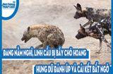 Video-Hot - Video: Đang nằm nghỉ, linh cẩu bị bầy chó hoang hung dữ đánh úp và cái kết bất ngờ