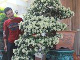 Hội nhập cây cảnh nghệ thuật, bonsai Quốc tế: Cách tiếp cận nào phù hợp với Việt Nam
